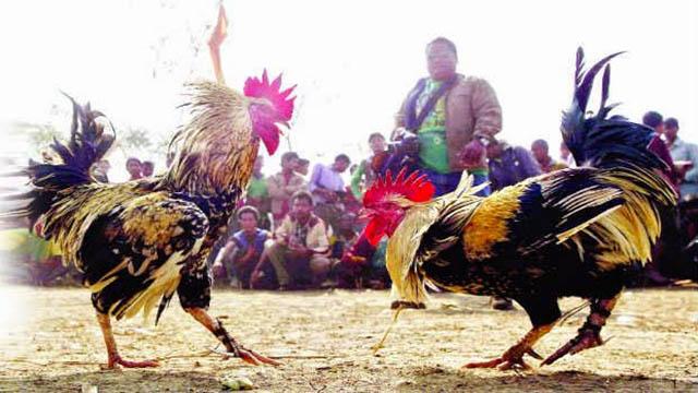 Laman Judi Sabung Ayam Online Indonesia